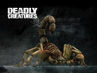 Deadly Creatures Wallpaper - Scorpion
